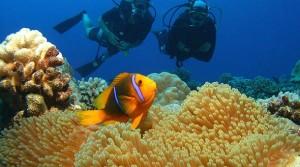 Купить тур на Сейшелы из Москвы, Сейшельские острова туры цены 2014
