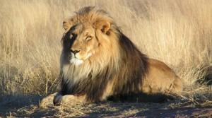 Виндхук Намибия туры цены, туры в Намибию цены, отдых в Намибии цены