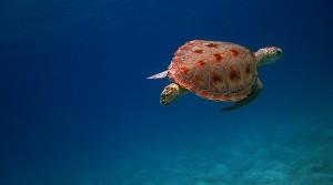 отдых на Маврикии отзывы туристов