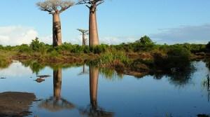 Туры Мадагаскар отдых цены, туры на Мадагаскар из Москвы, остров Мадагаскар туры цены.